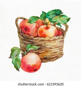 Apples in a basket. Watercolor illustration on white background.