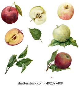 Apples painted with watercolors on white paper. Red apple, green apple, leaf, half an apple. Set apples. Watercolor food. Fruit.