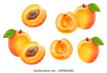 Apricot fruit set watercolor isolated on white background