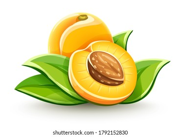 Apricot ripe fruits with ossicle and green leaves, Isolated on white background. 3D illustration.