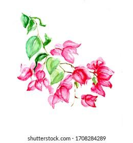 Aquarelle painting of flower sketch art illustration