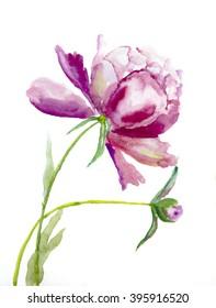 Aquarelle picture: flower  peone