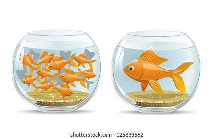 Aquarium comparison. Illustration of the reaction of different participants in the same conditions.
