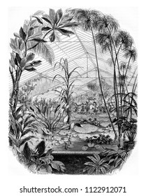 The Aquarium of the Garden of Plants, vintage engraved illustration. Magasin Pittoresque 1855.