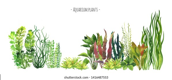 Aquarium plants watercolor illustration set. Red, blue, green and yellow water plants. Freshwater plants border. Underwater plants border