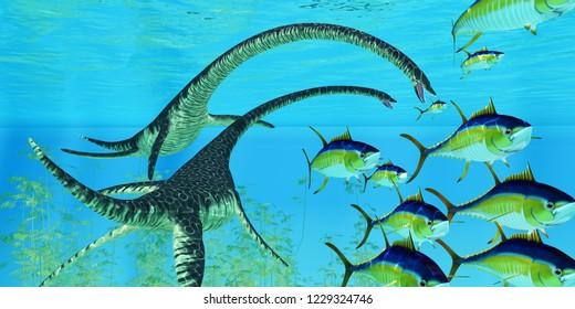 Aquatic Reptile Elasmosaurus 3D illustration - Yellowfin tuna try to escape the jaws of two Elasmosaurus marine reptiles during the Cretaceous Period of North America.