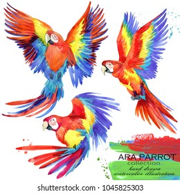 Ara parrot hand drawn watercolor illustration set