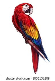 Ara parrot. Macaw. Hand drawn parrot isolated on white. Digital painting.