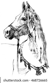 ARABIAN HORSE - Drawing