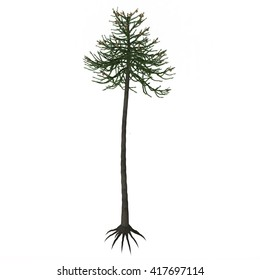Araucaria Tree 3D Illustration - Araucariaceae is a very successful early conifer order who appeared on Earth in the Triassic period and lasted until today with several living species.
