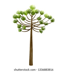 Araucaria Tree Illustration