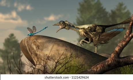 An archaeopteryx, a Jurassic era theropod dinosaur that looked much like a bird, lunges at a dragonfly at the end of a smooth river stone. 3D Rendering