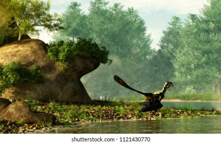 An archaeopteryx, a Jurassic era theropod dinosaur that looked much like a bird, hangs out by a Cretaceous era river.  3D Rendering
