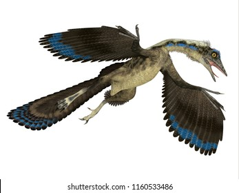 Archaeopteryx Reptile in Flight 3D illustration - Archaeopteryx was a carnivorous Pterosaur reptile that lived in Germany during the Jurassic Period.