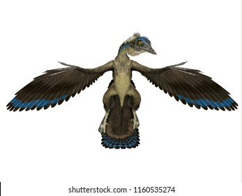 Archaeopteryx Reptile Front 3D illustration - Archaeopteryx was a carnivorous Pterosaur reptile that lived in Germany during the Jurassic Period.