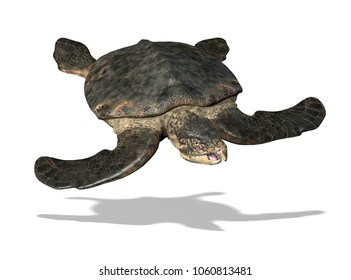 The Archelon was a huge prehistoric sea turtle that lived during the Cretaceous period - 3D render
