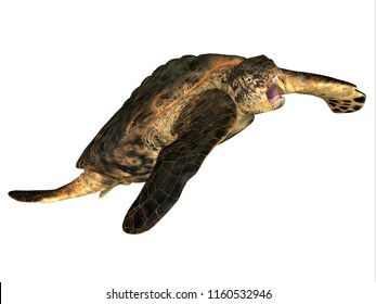 Archelon Turtle Swimming 3D illustration - Archelon was an aquatic reptile sea turtle that lived in South Dakota, USA during the Cretaceous Period.