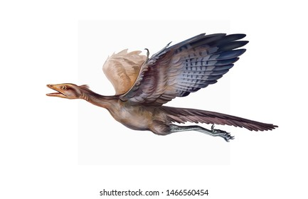 archiopteryx flies, extinct animals of the Jurassic period, ancient bird, isolated image on a white background