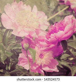 art floral vintage blurred background with pink and lilac peonies