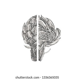 Artichoke. Hand drawn illustration. Can be used for shop, menu, cafe, restaurant, poster, banner.