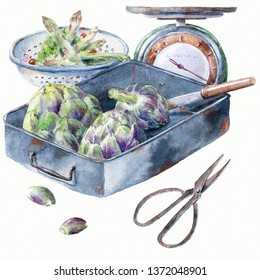 Artichoke in old rusty metal box. Watercolor illustration on white background