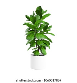 Artificial Fiddle Leaf Fig Tree planted white ceramic pot isolated on white background. 3D Rendering, Illustration.