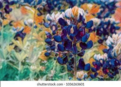 Artistic image of bluebonnet .