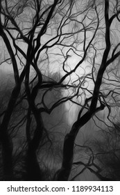 Artistic view of leafless Fall trees on a gloomy evening at dusk.