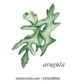 Arugula leaves. Painted arugula. Salad ingredient arugula watercolor. Cooking herb arugula painted card.