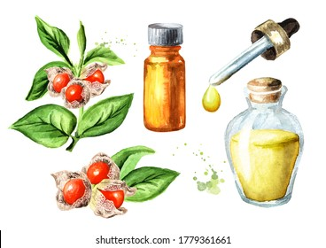 Ashwagandha or Indian ginsengherbal oil set. Hand drawn watercolor illustration  isolated on white background