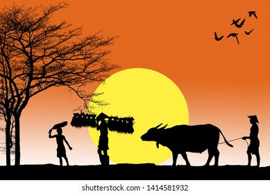 Asia culture isolated on white Silhouette of Asian farmer harrowing rice field lifestyle of asian people in countryside,Vietnam farmer Bearing seedlings of rice to plant, Asian farmer Bearing rice