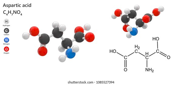 Aspartic acid, also known as aspartate, is an amino acid that is used in the biosynthesis of proteins. Chemical formula: C4H7NO4. 3D illustration. Isolated on white background.