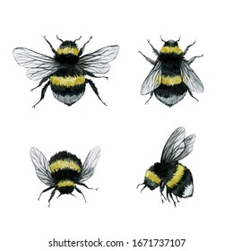 assorted bumblebees watercolor illustration, wild insect clipart, isolated on white background