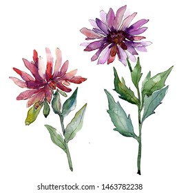 Aster floral botanical flowers. Wild spring leaf wildflower isolated. Watercolor background illustration set. Watercolour drawing fashion aquarelle isolated. Isolated asters illustration element.