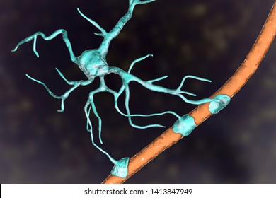 Astrocyte and blood vessel, 3D illustration. Astrocytes, brain glial cells, also known as astroglia, connect neuronal cells to blood vessels
