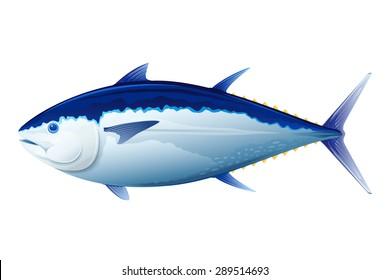 Atlantic bluefin tuna, realistic sea fish illustration, isolated