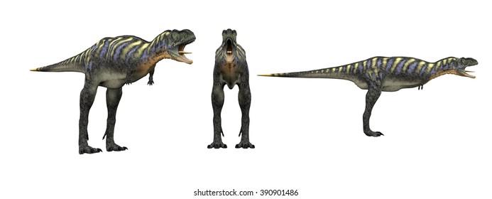 Aucasaurus. Dinosaur isolate on white .3d render