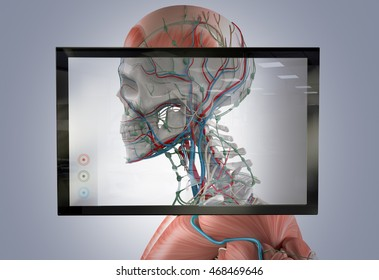 Augmented reality showing human anatomy. 3D illustration.