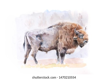 aurochs or european bison watercolor painting