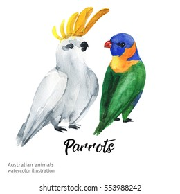 Australian animals birds parrot watercolor illustration hand drawn wildlife isolated on a white background.