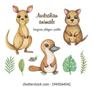 Australian animals clipart watercolor, Kangaroo, Quokka, Platypus illustration, hand drawn cute animals with tropical plants