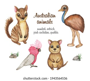 Australian animals clipart watercolor, Numbat, Ostrich emu, quokka, pink cacatoo illustration, hand drawn cute animals set isolated