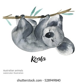 Australian animals watercolor illustration hand drawn wildlife isolated on a white background.  Koala. Australia Day