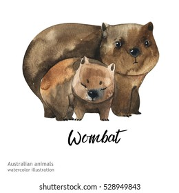 Australian animals watercolor illustration hand drawn wildlife isolated on a white background. Wombat. Australia Day