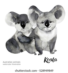 Australian animals watercolor illustration hand drawn wildlife isolated on a white background.  Koala.