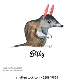 Australian animals watercolor illustration hand drawn wildlife isolated on a white background. Bilby.