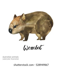 Australian animals watercolor illustration hand drawn wildlife isolated on a white background. Wombat.
