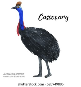 Australian animals watercolor illustration hand drawn wildlife isolated on a white background. Cassowary.