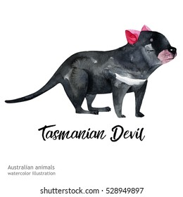 Australian animals watercolor illustration hand drawn wildlife isolated on a white background. Tasmanian Devil.