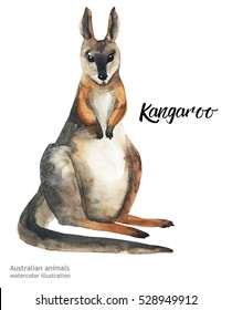 Australian animals watercolor illustration hand drawn wildlife isolated on a white background.  Kangaroo. Australia Day